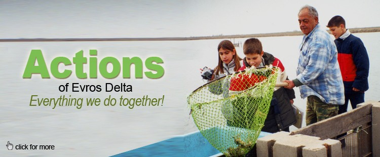 Activities: Everything we do together at Evros Delta!