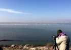 Simultaneous waterfowl count in the Greek and Turkish part of the Evros Delta