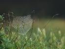 Ιστός αράχνης / Spider web (L. Simitzi)