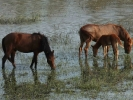 Άλογα / Horses (K. Panagiotidis)