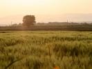 Καλλιέργια χωραφιών / Farming (Y. Gasteratos)