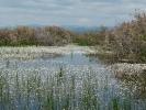 Εποχιακός υγρότοπος στις Αλμύρες  / Temporary fresh water marsh in Almires (E. Stets)