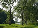 Παραποτάμιο δάσος / Riparian forest (E. Stets)