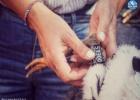 Δακτυλιώσεις νεοσσών Πελαργών