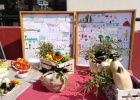 Harvest Festival of the School Gardens Project on the 2nd Primary School of Feres