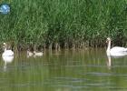 Bird breedings in the Evros Delta