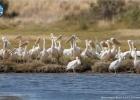 Η εντυπωσιακή μετανάστευση των πουλιών
